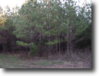 Tennessee Hunting Land 49 Acres Converted To Farmland