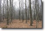 New York Hunting Land 32 Acres Land in Foothills of Adirondacks NY 32 Ac