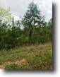 20 Acres For Sale Near Noxubee Refuge