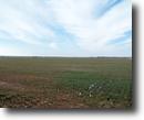 2/10 Auction: 302 Acres Cropland/Grass