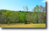 34.26 Gorgeous Acres in Flowery Branch, GA