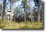 Florida Hunting Land 556 Acres Natural Bridge Farm