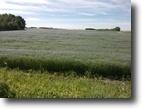 Saskatchewan Farm Land 320 Acres Good Saskatchewan Farmland, leased.