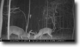574 Acres of Hunting Land in Grenada Co.