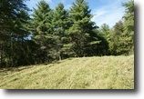 19.3081 Acre Wooded Hunting Tract