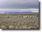 Montana Farm Land 20 Acres Mountain View Property