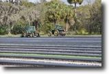 Florida Farm Land 289 Acres Severt Farm