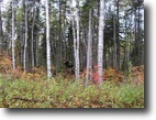 Michigan Hunting Land 640 Acres TBD Peshekee Grade Rd., MLS# 1092359