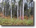 Michigan Hunting Land 640 Acres TBD Peshekee Grade Rd., MLS# 1092359