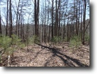 7.4 Acres of Wood Land Near Trout Stream