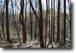 Alabama Land 29 Acres Wooded Development Land in Patrick County