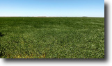 5/25 Auction: 159 Acres Crop/Minerals/Home