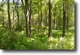 Wooded 30 Acre Tract