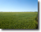 6/8/16 Auction: 175.9 Acres of Cropland