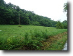 34.42 Acres on 1900 Wilmore Hollow Rd