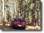 19.4 acres in the piney woods of east TX!