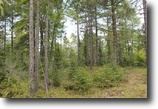 Michigan Hunting Land 57 Acres TBD Pt Louis / Rice Lake Rd., MLS# 1095607