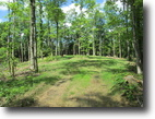 46 Acre Wooded Tract In Edmonton, KY