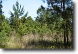 Florida Hunting Land 396 Acres Beall Tract