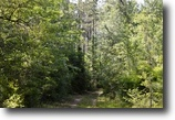 Florida Hunting Land 204 Acres Sand Path Road