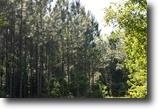 Florida Hunting Land 362 Acres Peanut Road