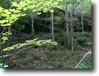 Kentucky Hunting Land 75 Acres Att:Hunters 75+/-ac/Cave in Elliott Co.KY