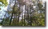 Texas Farm Land 55 Acres 55ac of hunting timberland