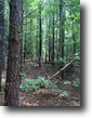 39 Acres For Sale in Clarke County