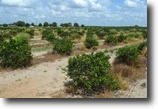 Florida Land 129 Acres Lake Hendry Road Citrus and Peach Grove