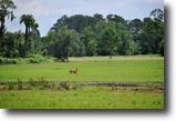 Sebring 461 Acres