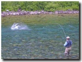 Imagine your salmon catch in front of your land