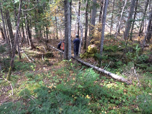 surveyors on the land.