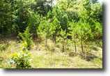 9/9/16 Auction: 357.21 Acres of Hunting
