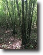 37 Acres For Sale in Kemper County