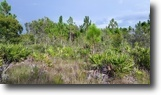 Florida Land 40 Acres US 41 Frontage
