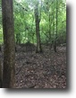 30 Acres of Hunting Land in Kemper County