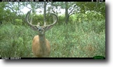 Iowa Hunting Land 130 Acres Trophy whitetail property!