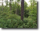 200 Acres Timberland Hunting State Forest