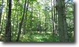 40 Acres Bordering State Forest German NY
