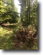 34 Acre Tract Of Timberland in Winston Co