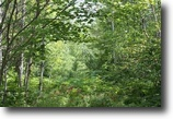 Michigan Hunting Land 40 Acres TBD off Forest Rd 2127 (E40), Mls# 1097427