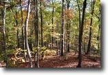 176 acres, woods, secluded, hunting & more