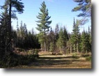 Michigan Hunting Land 40 Acres 21750 Timberland Dr., Mls# 1097521