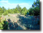 40 Acres of Hunting/Pond