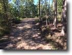 Kentucky Hunting Land 197 Acres Hunter: 197+/-ac Elliott Co.KY $109,900