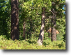 California Land 1 Acres Beautiful Homesite Foxwood Lake Almanor