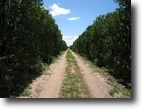 Florida Ranch Land 60 Acres Citrus Grove with Development potential