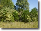 Tennessee Land 10 Acres 9.50 Ac Rock Springs Rd Celina, TN 38551