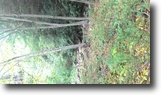 Pennsylvania Land 1 Acres wooded land with stream