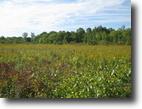 34 acres Hunting Land near Ithaca NY